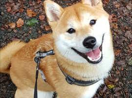 Dog walking & Pet Services