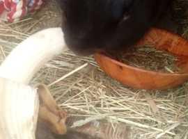 Rabbit and Gunea pig rescue