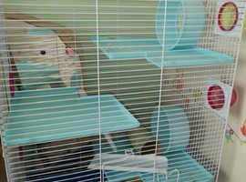 3 tier cage