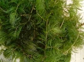 Oxygenation plants for sale