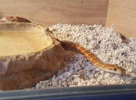 Reptile Rescue Balls and corns