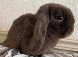 Stunning female rabbit