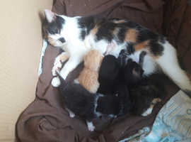 Beautiful kittens for sale.