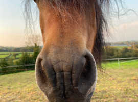 Looking for Loan Horse