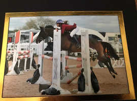 138 jumping pony for sale
