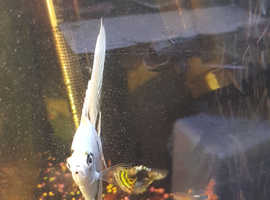 Fishtank and fish
