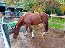 Looking for 2 sharers for my geldings