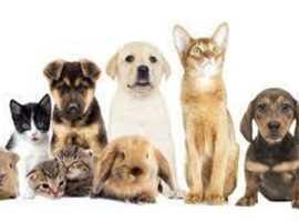 Pet sitter service