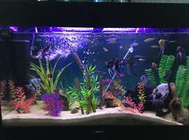 Aquarium set up for sale including fish,
