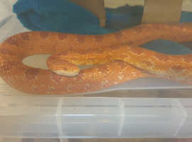 Reptiles For Sale & Rehome in Birmingham | Find Pets For