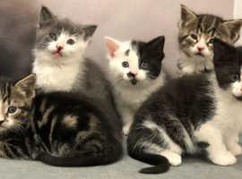 WANTED kitten