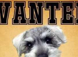 Wanted- large dog