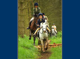 12hh-12.2hh 1st ridden Bomb proof, Pony Club pony - WANTED