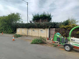 Tree surgeon - Local and professional service