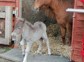 wanted foal