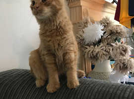 Male young cat/kitten 6months old