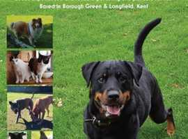 Experienced pet sitters based in Kent. Offering a variety of services to remove the stress of being away from your pet!