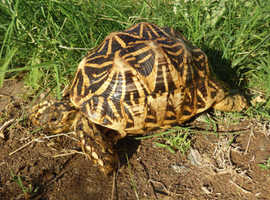 Small Tortoise WANTED