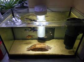 Goldfish set up