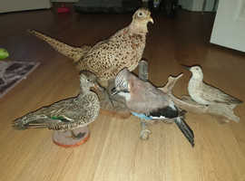 4 British birds