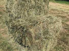 Hay Bales Conventional size baled 2020