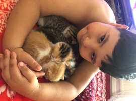 Cats x kittens