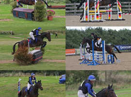 16.3hh 13 year old Irish sport horse available for part loan