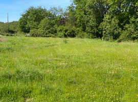Field or Paddock wanted for