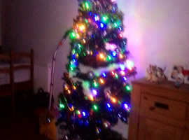 Want a Christmas tree of any size or Christmas decorations or both