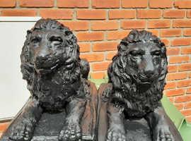 2 beautiful black lions