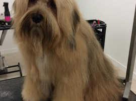 Hairy Beasts Dog Grooming Salon Shebbear Beaworthy