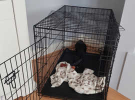 Dog crate. Medium/36inch