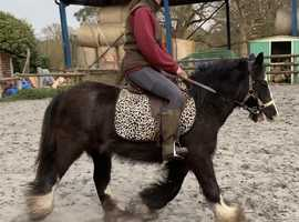 13h cob mare