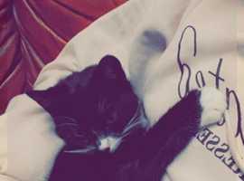 9 month beautiful cat