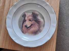 Sheltie plate by faithful freinds