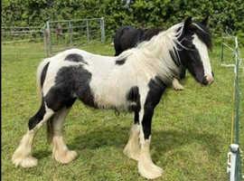 Mare & foal also last years foal