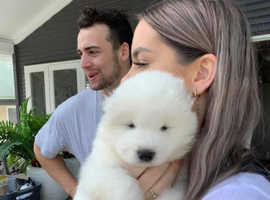 Loving and Playful Samoyed Pups Ready