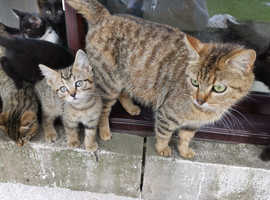 Kittens ready for family home