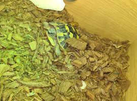 Herman's tortoise and full set up
