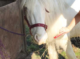 Free horse riding-rider wanted