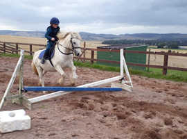 Sweet Welch gelding for sale