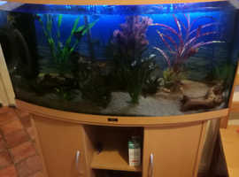 Well established 180l Juwel fish tank with stand.