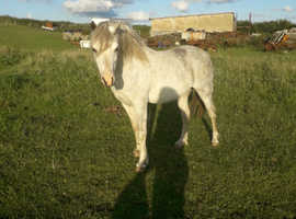 lovely pony for sale