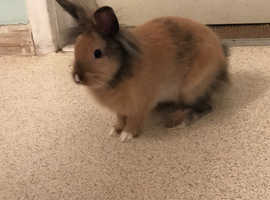 Variety of bunnies available