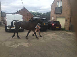 Lovely 2 yr old filly for sale