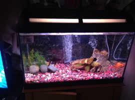 Small 2 foot fish tank