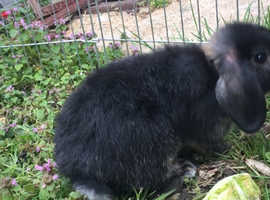 Boy bunny rabbits