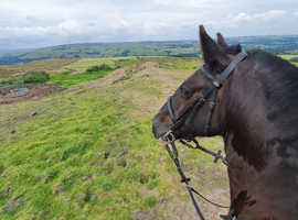 Wanted horse for full loan to move to West Durham
