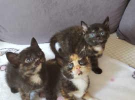 3 kitten girls