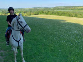 Maisie a lovely 15.1hh mare sadly looking for a new home